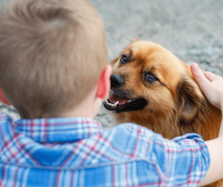 ילד עם הגב מלטף כלב
